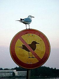 Свобода и запреты